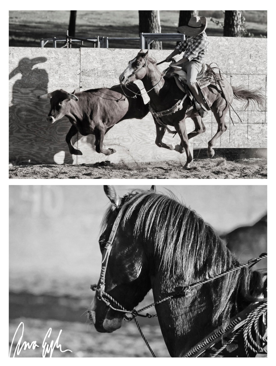 Archive_Mexican Style Rodeo