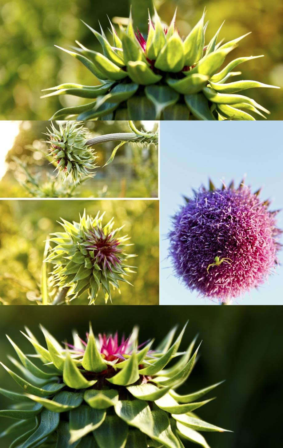 Flower_Still Life 2