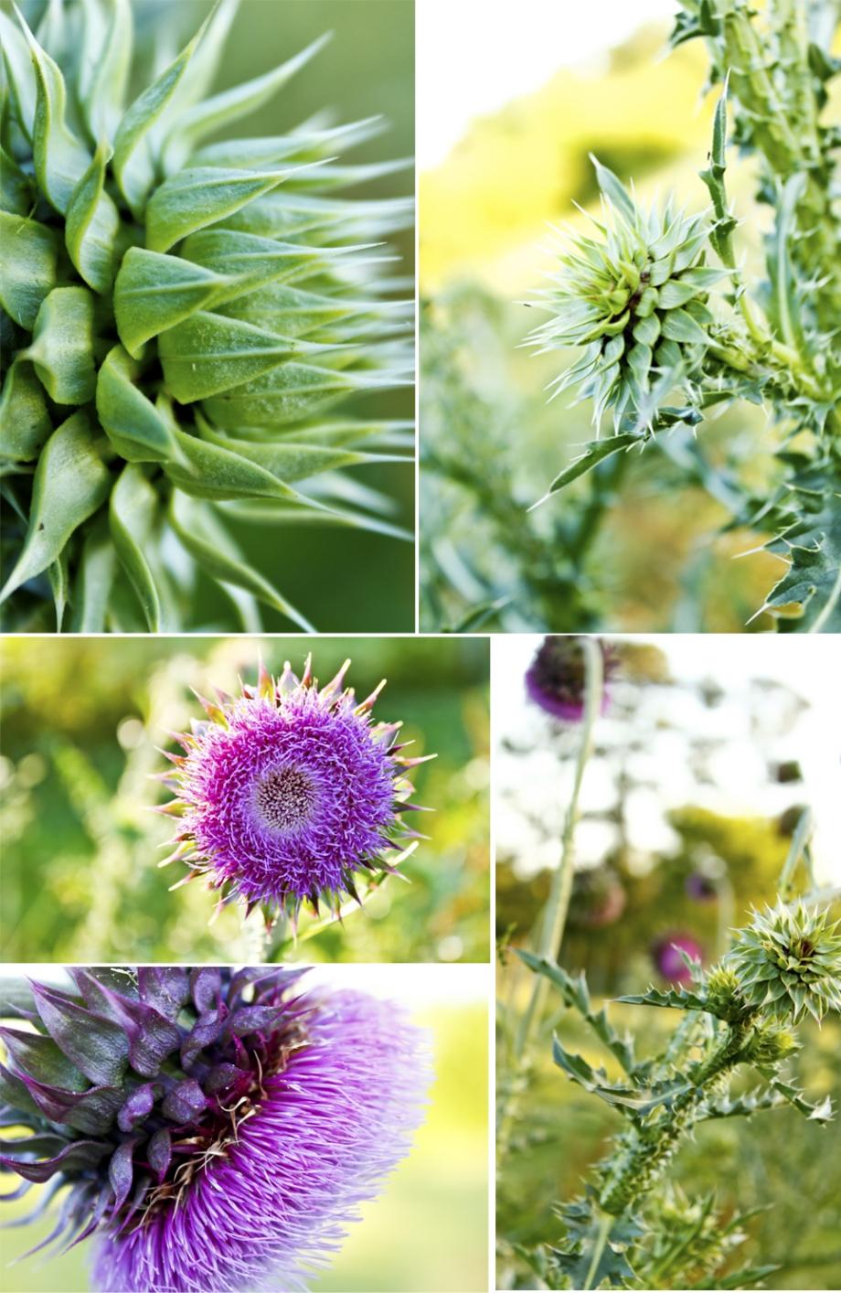 Flower_Still Life